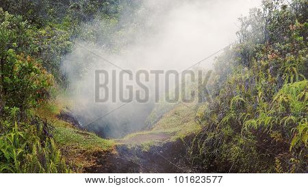 Steam Rising From Vent In Jungle At Hawaii Volcanoes National Park