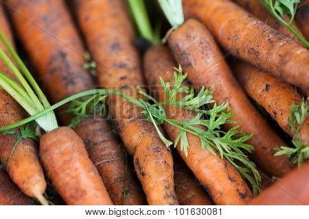 farming, harvest, food, vegetables and agriculture concept - close up of carrot