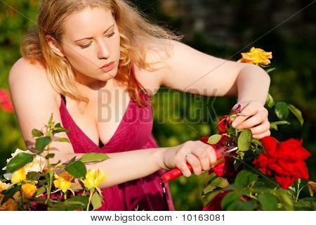 weiblich working auf Rosen im Garten