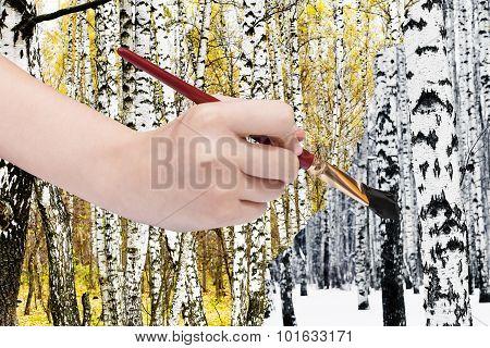 Paintbrush Paints Black Birch Trunk In Winter