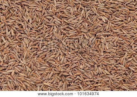Organic Cumin seed.
