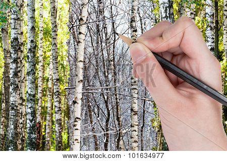 Pencil Draws Bare Birches In Winter Forest