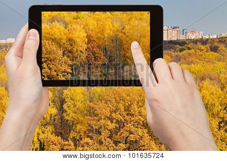 Picture Of Yellow Woods In Autumn On Tablet Pc
