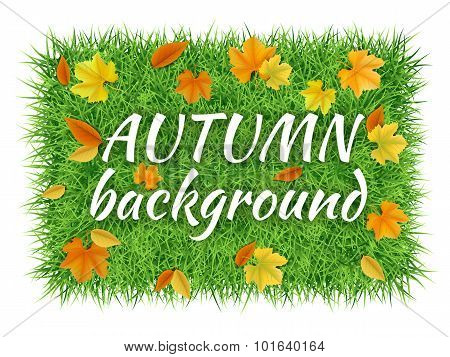 Autumn Vector Background With Grass Carpet And Fallen Leaves.