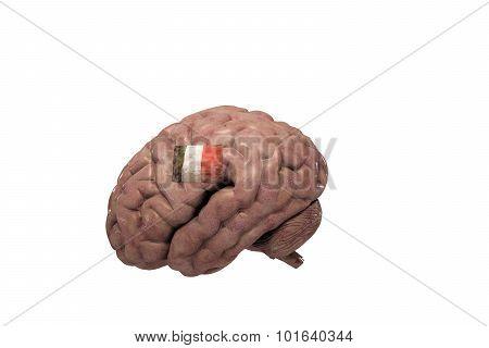 Italian Brain