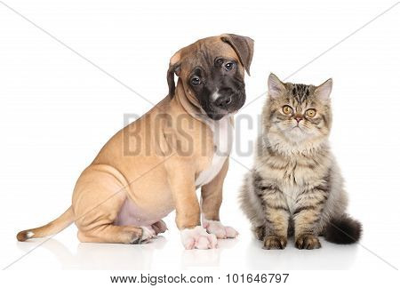 Puppy And Kitten On White Background
