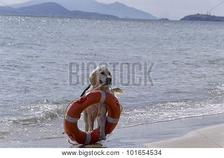 Rescue Dog With Preserver