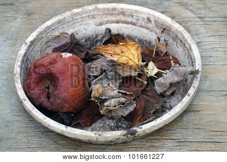 rotten apple with leaves in a bowl