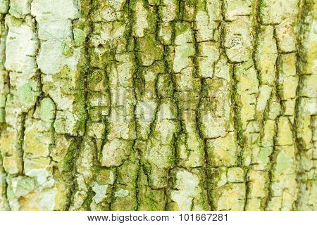 Tree Bark Texture For Nature.