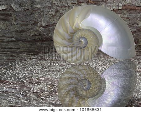 Nautilus Shell Cut