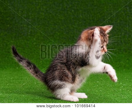 Cute little kitten on artificial green grass