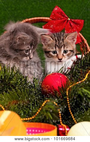 Close up portrait of a beautiful two kittens - christmas background
