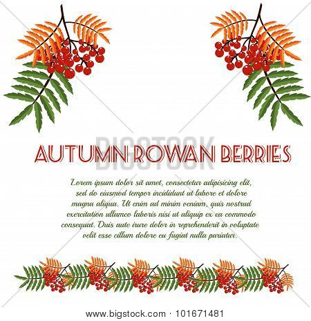 Autumn Pattern With Rowan Berries. Nature Background.  Fall Colorful Floral Background. Elegant Flor