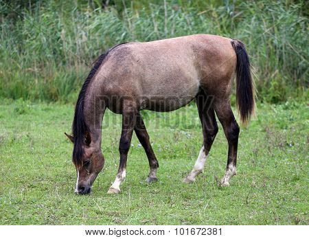 Pretty Foal Grazing On Meadow