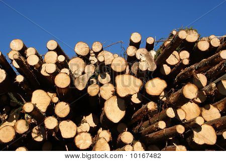 Spruce Logs Stacked With Blue Sky Background