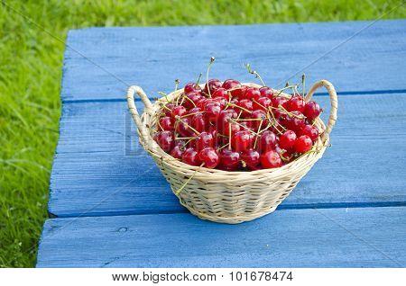 Ripe Cherries In Wicker Basket On Blue Table