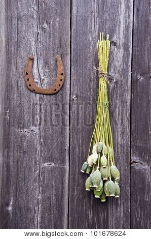 Bunch Of  Poppy Heads And A Horseshoe On Wooden Wall