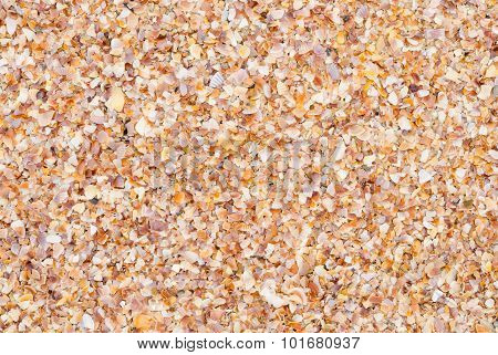 Shell Background On A Sand Beach
