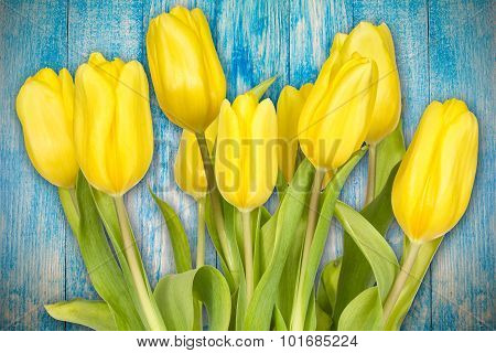 Yellow Tulips Against Blue Background