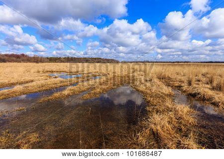 landscape with flooded spring meadow