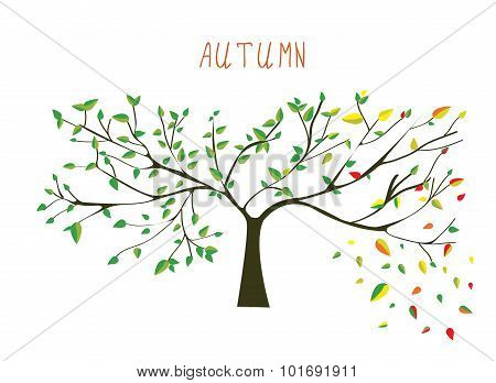 Autumn Is Coning Tree