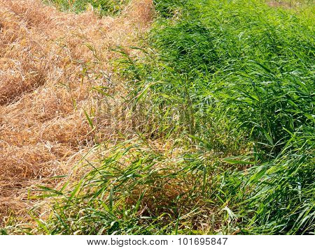The nature grass background and texture.