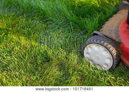 Lawn mower cutting green grass. Work in the garden.