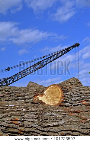 Huge logs and a boom