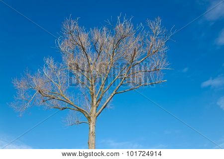 Leafless tree in late autumn