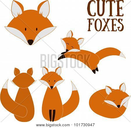 Set Of Cute Foxes. Vector Cartoon Fox Isolated On White. Sitting, Sleeping, Jumping Fox. Flat Design