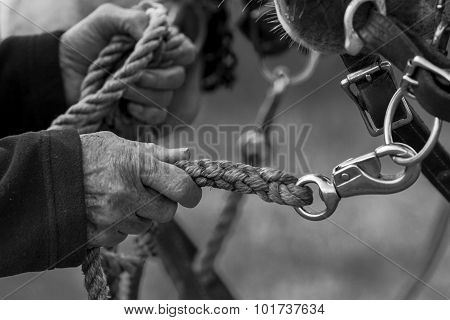 Hands Holding The Lead Rope.