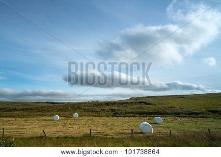 Farmland in Iceland