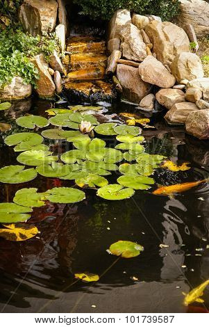Small Picturesque Garden With A Pond, Water Lilies And Stones