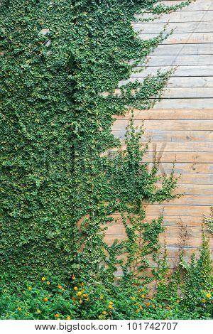Wood Wall With Tree 4