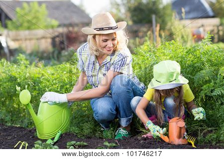 Mother And Daughter Planting Seedling In Ground On Allotment