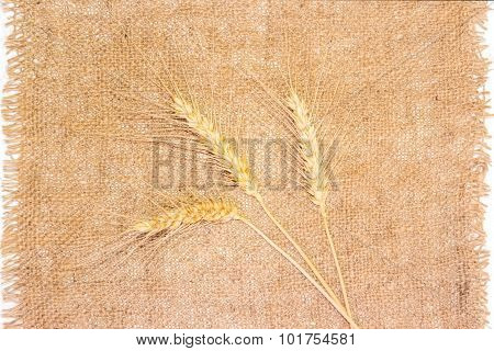 Three Spikelets Of Wheat On A Sackcloth
