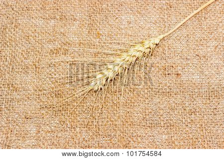One Spikelet Of Wheat On A Sackcloth