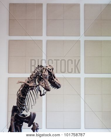 T Rex Skeleton By Wall