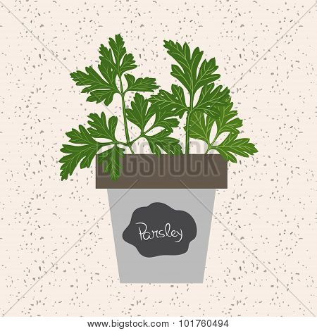 Vector - Fresh Parsley Herb In A Flowerpot. Aromatic Leaves Used To Season Meats, Poultry, Stews, So