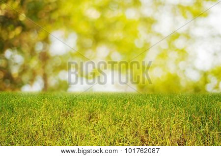 Rice Field With Spring