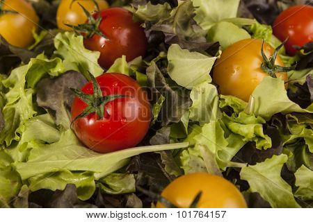Fresh lettuce and red and yellow cherry tomatoes