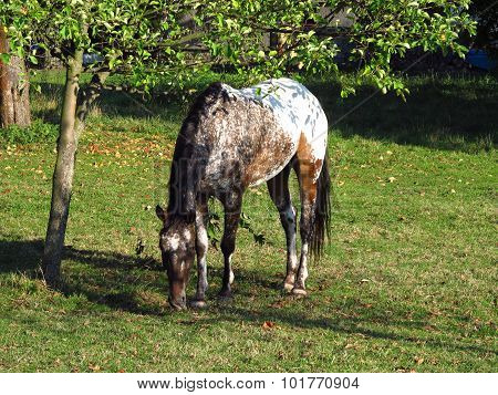 horse under the tree