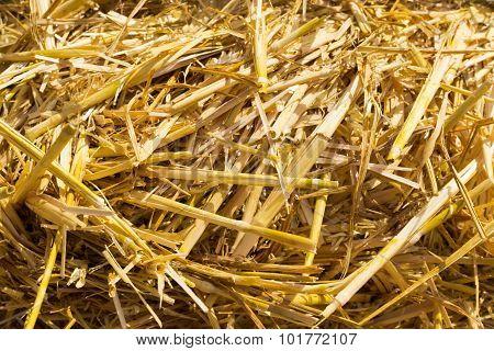 Macro Closeup Of Straw