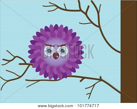 Purple owlet
