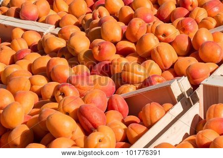 Apricots On Display For Sale At Farmer's Market