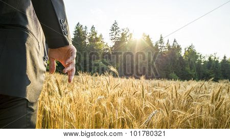 Rear View Of Man In Elegant Suit Standing In Ripening Golden Wheat Field