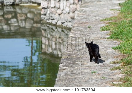Black Cat Goes Fishing