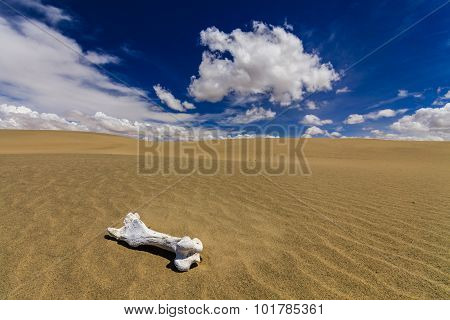 White Bone On The Sand In The Gobi Desert. Mongolia.