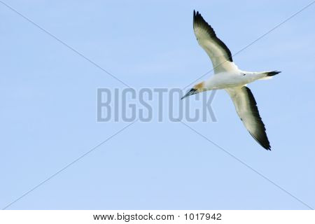 Takapu In Flight