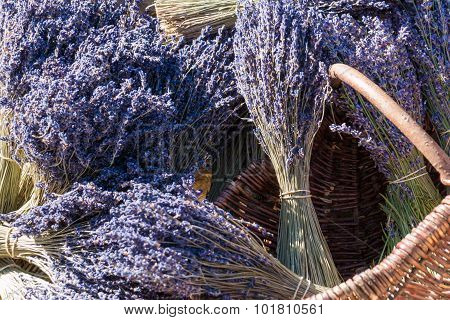 Lavender Shrubs For Sale